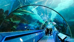 ... walking with the Sharks ... Real People Architecture Built Structure Water Travel City Tunnel Indoors  People Aquarium Fish Fun Family Fun Blue Under Water Swimming Fish Tank Transparent Entertainment Family Weekend Marine Life Marine Fish (Linandara) Tags: sharks realpeople architecture builtstructure water travel city tunnel indoors people aquarium fish fun familyfun blue underwater swimming fishtank transparent entertainment family weekend marinelife marinefish