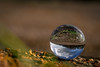 Mini world (WaterBugsPics) Tags: globe reflection round sky cloud wood field sphere crystal ball crystalball cy2
