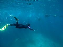 K-Sealbound (Snirk) Tags: seal underwater gopro montague island seals narooma snorkelling animal