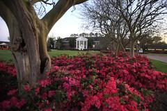 Elkins Hall Azaleas Spring 2012 (universityoflouisianasystem) Tags: elkins azaleas flowers scenic thibodaux la usa