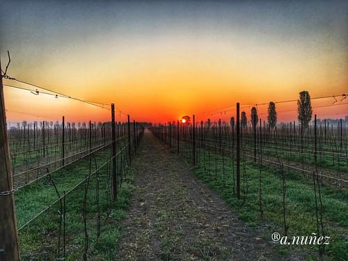 #Sunrise at the #WineFarm #WineYard #WorkPlace #FVG #Italy 03/04/2017