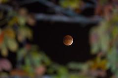 Supermoon Lunar Eclipse (Jonathan Salmi) Tags: sky moon night eclipse astro astrophotography lunar bloodmoon supermoon