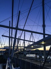 Kurilpa Bridge (NettyA) Tags: city bridge silhouette skyline night cityscape footbridge australia brisbane qld queensland brisbaneriver buildiings 2015 seqld kurilpabridge appleiphone6