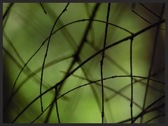 Un vert, s'il vous plait! (isabelle bugeaud) Tags: triangle pin vert arbre gomtrie aiguille conifre quadrilatre