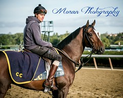Tonalist (EASY GOER) Tags: horses horse ny newyork sports race canon track running racing 5d athletes races thoroughbred equine belmontpark markiii