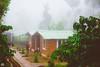 IMG_6214 (athingcalledlife) Tags: blackandwhite india green art nature rain photography colours lush coorg virajpet vsco