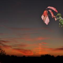 Herbst (Uli He - Fotofee) Tags: herbst himmel blatt bltter uli ulrike abendhimmel weinberg herbstbltter hergert ulrikehe ulrikehergert ulihe