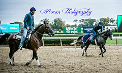 Maggie Wolfendale and Tom Morley (EASY GOER) Tags: horses horse ny newyork sports race canon track running racing 5d athletes races thoroughbred equine markiii