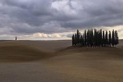 Val d'Orcia (fotoimmaginando) Tags: italy canon italia valle val tuscany siena montalcino pienza toscana autunno vigne italie tuscania colline dorcia valli cipressi cipresso vigneti squirico eos6d ef24105