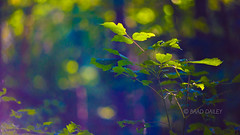 Letting the Light Drip Through Your Branches (braddailey) Tags: statepark park wild plants usa plant nature field forest woods flora nikon state bokeh outdoor indianapolis indiana depthoffield full zen frame serene fullframe fx depth colorist d610 colourist fortharrison nikond610