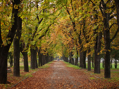 An Autumn road to the other side (un2112) Tags: road autumn trees fall cemetery graveyard leaves car october hungary budapest g7 fiumeiroadnationalgraveyard