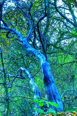 Rain soaked tree trunks in the woods (35mmMan) Tags: blue trees green forest eerie android samsungkzoom