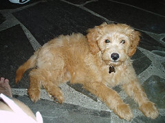 nellie--shes-one-of-morgan-and-chewys-girls-_2731178339_o