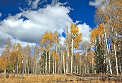 Beautiful Aspen Grove (http://fineartamerica.com/profiles/robert-bales.ht) Tags: wood autumn red arizona people panorama orange mountain snow mountains color tree fall nature colors beautiful beauty leaves yellow forest season landscape outdoors gold golden photo leaf oak woods october scenery colorful flickr fallcolor bright fallcolors fineart scenic vivid places scene autumnleaves foliage alpine bark valley birch states wilderness aspen tranquil haybales aspentrees vibrantcolor aspengrove aspenleaves aspenforest imagekind flagstaffarea photouploads robertbales