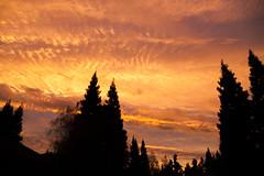 2015_11_24_sacto-sunrise_31z (dsearls) Tags: pink blue autumn sky fall clouds sunrise violet east redwoods cirrocumulus cirrus altocumulus altostratus goldriver cirrostratus 20151124