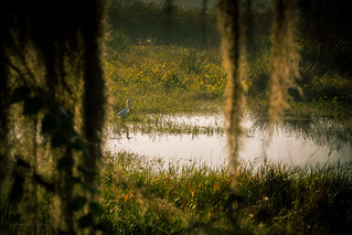 The Garden in a swamp