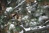 The Hunter (Jon David Nelson) Tags: redtailedhawk buteojamaicensis buteo hawks wildlife centraloregon conservation education raptors birdsofprey birds highdesert