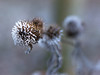 Icy spines (marcmayer) Tags: bokeh ice icy eis eiskristall crystal winter nikon nikkor 50mm f18 d5200 nature natur cold kalt