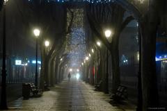 NIEBLA EN ALBACETE (Nacho Alexeric) Tags: niebla frio noche albacete castilla la mancha canon eos 7d ef 25 105 ciudad luces navidad paseo arboles enfoque