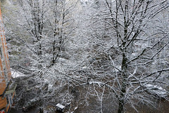 snow in the city (j.p.yef) Tags: peterfey jpyef yef germany hamburg seasons winter snow street trees