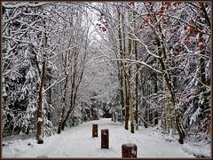 Trimm Dich Pfad (almresi1) Tags: snow winter welzheim wood