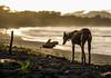 _DSC9576-3 (ayatonn) Tags: apocalypse dog beach