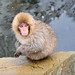 Snow Monkey (2) : a child in snowfall
