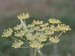 P7181173 (jesust793) Tags: flor flower macro
