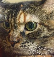 Cat Eye Reflection (jjredx) Tags: reflection cateye cat animal selfie