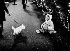 christmas postcard (Zlatko Vickovic) Tags: streetstreetphoto streetphotography streetphotographybw streetbw streetphotobw blackandwhite monochrome zlatkovickovic zlatkovickovicphotography novisad serbia vojvodina srbija