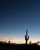 Saguaro sunset (Kenny C Photography) Tags: arizona saguaro cactus sun venus astrophotography astronomy planet silhouette saguaronationalpark nationalpark sunset bluehour