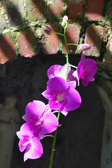 Key West (Florida) Trip 2016 0040Ri 4x6 (edgarandron - Busy!) Tags: florida keys floridakeys keywest flower flowers higgsbeach