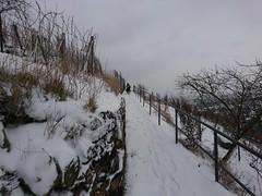 In den Weinbergen (Fotos von Helmut) Tags: weinberge winter schnee elbtal