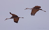 Sandhill Cranes in flight (Robyn Waayers) Tags: sandhillcranes saltonsea imperialcounty california robynwaayers