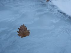 Ice_7 (iasmax) Tags: olympus omd river ice em5 troggia fume ghiaccio