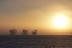 Melting the fog (beyondhue) Tags: fog winter cold snow tree foggy beyondhue ontario farm field sun shine morning