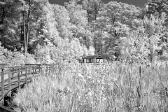 Wetlands First Shelter (Neal3K) Tags: georgia ir infraredcamera kolarivisionmodifiedcamera bw blackandwhite 590nmfilter claytoncountywaterauthority newmanwetlandscenter wetlands