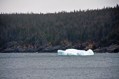Iceberg in Bay Bulls 5 (LongInt57) Tags: ice iceberg floating cold water atlantic ocean baybulls newfoundland canada trees forest shore rock white blue green brown nature landscape scenic sea