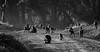 The First Rays Of Sun (AnyMotion) Tags: olivebaboon anubisbaboon anubispavian grünerpavian papioanubis animal animals tiere nature natur wildlife morninglight morgenlicht forest wald 2011 lakenakurunationalpark kenya kenia africa afrika anymotion reisen travel 5d2 canoneos5dmarkii bw blackandwhite sw ngc npc
