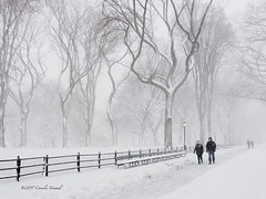 Dancing Trees in a Blizzard (CVerwaal) Tags: centralpark mall snow winter newyork ny usa americanelms olympusem5 lumixgvario1235f28 blizzard