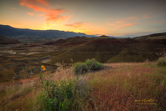 Painted Hills (erwin.delfin_photography) Tags: paintedhills sunrise landscape mountains wildflowers oregon traveloregon nature johndayfossilbeds