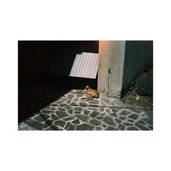 SDG-05 (sm0r0ms) Tags: olympus mjuii μ film analog kodak portra 35mm 2016 landscape architecture color photography sardinia italy autaut romainsaccoccio littledoglaughednoiret