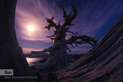 Tree Monster. (muriloals) Tags: old light moon lake tree oregon stars photography landscapes twilight brian crater adelberg 500px ifttt