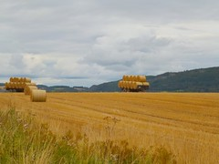 Harvest near Perth. (B4bees .(2m views)) Tags: scotland blog scenery fife brian forbes visiteastscotland