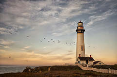 On The Wings Morning (karenhunnicutt) Tags: morning sunrise pacificocean californiacoast pigeonpointlighthouse takeflight californiabrownpelicans karenhunnicutt karenmeyer karenhunnicuttphotographycom minneapolisfineartphotographer