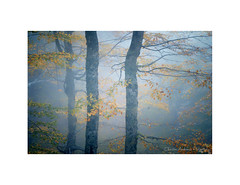 Blown by the light (Christos Andronis) Tags: autumn trees light fall woods foliage