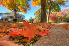 Autumn Evening (chrishowardphotography.com) Tags: autumncolors autumntrees autumnevening autumninohio