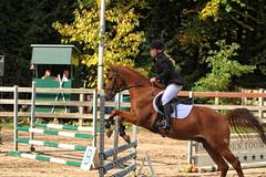 Doorn (Steenvoorde Leen - 3.4 ml views) Tags: doorn arreche paarden horses springen jumping hindernis fench halloween 2015 happyhalloween manege horse pferd reiten paard pferde haloween utrechtseheuvelrug manegedentoom cheval