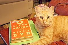 (K. Sawyer Photography) Tags: animal cat tabby books ipad