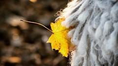 Gyemi's hair (Emese Ruzsa) Tags: